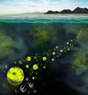 Artist's view of phytoplankton patchiness [image credit: Mazza]