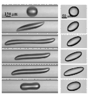 Stefano Guido research: confined and unbounded deformation at the same capillary number