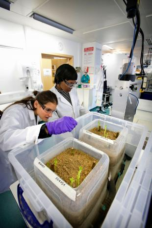 Researchers working in an environmental engineering laboratory