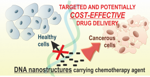 A graphic demostrating the targetted and cost effective drug delivery via DNA nanostructures carrying chemotherapy agent for cancer treatment